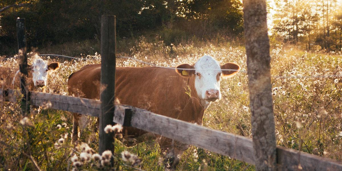 Property-Funding-Borrow-Farm-Finance-NZ